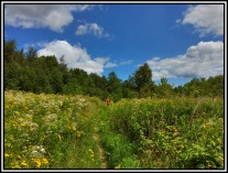 Beautiful day to walk through meadows of wild flowers.